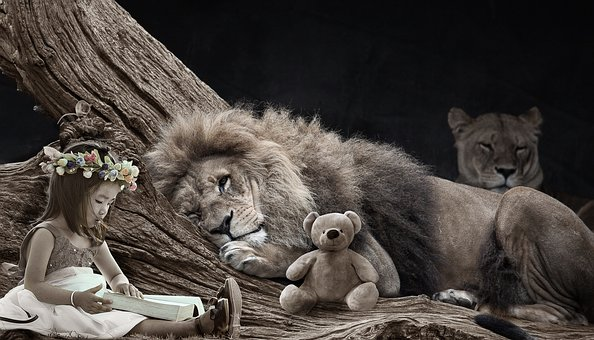 child reading to a resting lion with a teddy bear